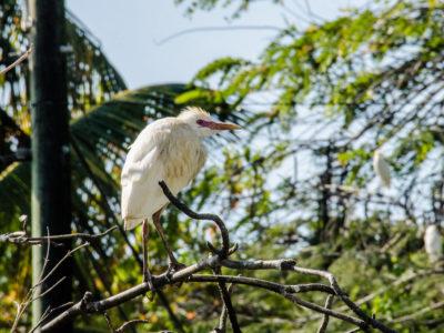 St Lucia Bird Watching
